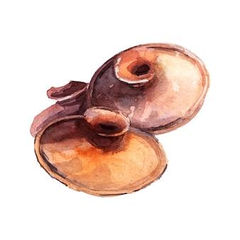 Акварель грунт глиняная крышка