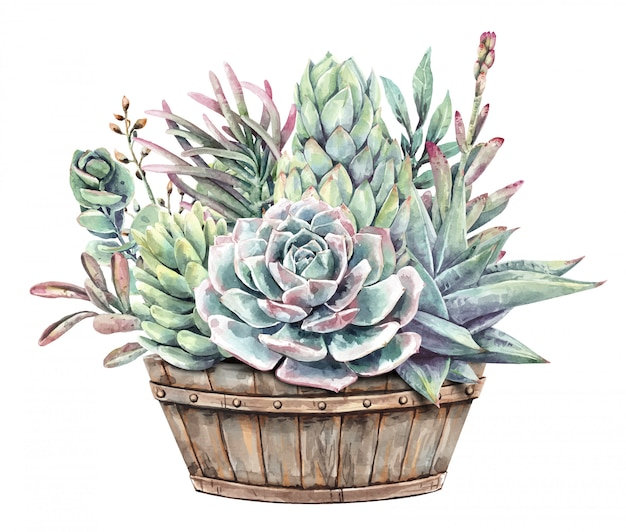 Watercolor painting set of succulents with half wine barrel planter.