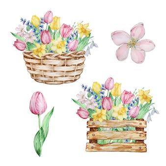 수채화 그림 봄 꽃, 바구니, 튤립, 수선화, 스노드롭이 있는 상자. 인사말 카드, 초대장, 포스터, 결혼식 장식 및 기타 이미지를 위한 꽃꽂이.