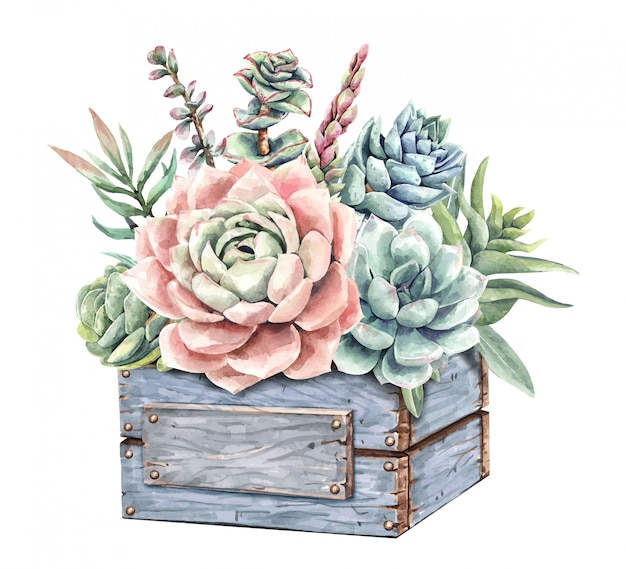 Акварель сочные кактусы и букет кактусов с деревянной коробкой для цветов.
