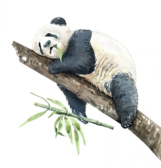 Watercolor panda eating bamboo on branch