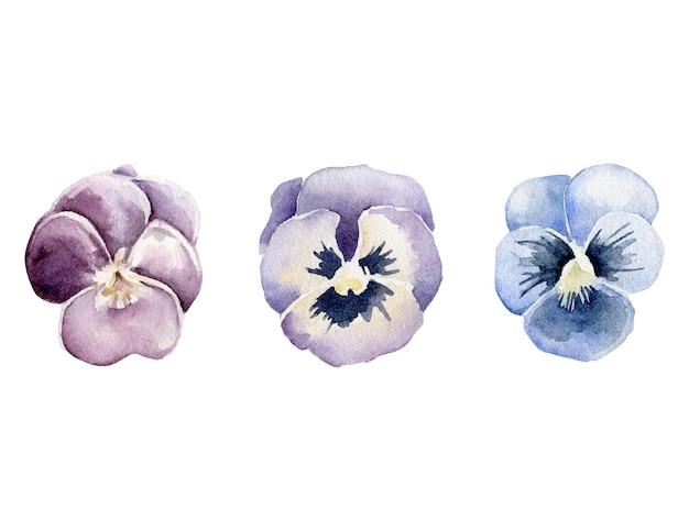 수채화의 팬 손으로 그린 된 팬지 꽃