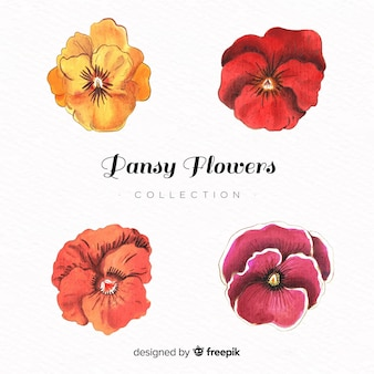 Watercolor pansy lower collection
