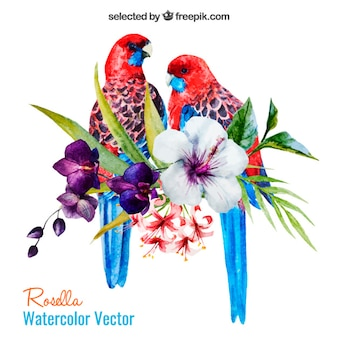 Pappagalli acquerello e fiori