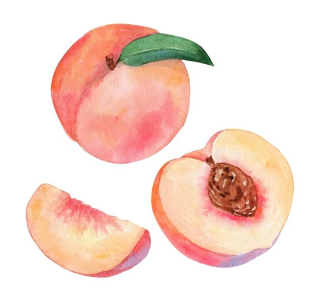 수채화 복숭아 과일 세트 흰색 절연
