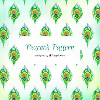 수채화 공작 깃털 패턴 컬렉션