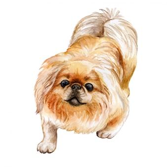 In watercolor pekingese dog