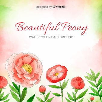Watercolor peony flower background