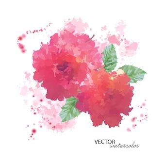 수채화 모란 꽃 흰색 절연