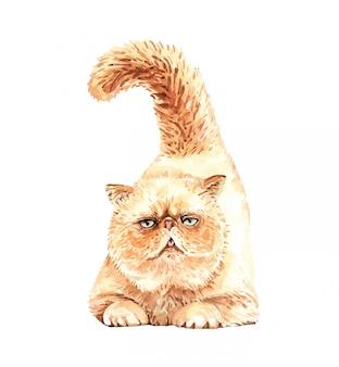 Акварель персидский кот. акварельная краска кошка дразнит