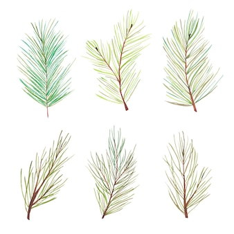 Watercolor pine tree branches set. forest pine tree needles branches