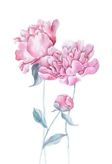 수채화 핑크 모란 꽃다발