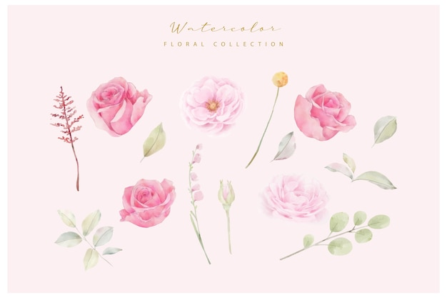 Watercolor pink rose flowers vector collection