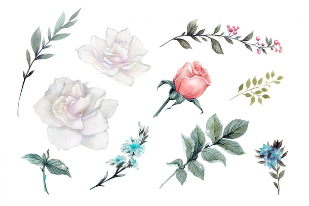 Watercolor pink roses vintage vector design set.