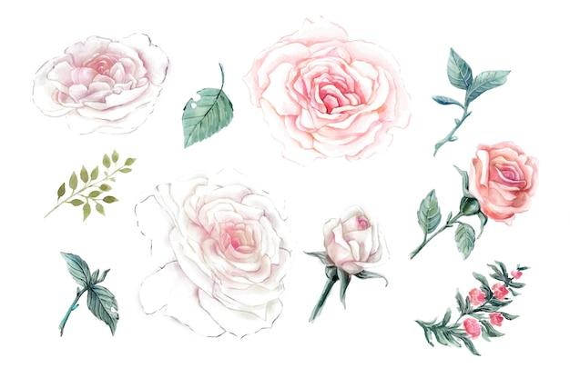 Watercolor pink roses vintage vector design set.