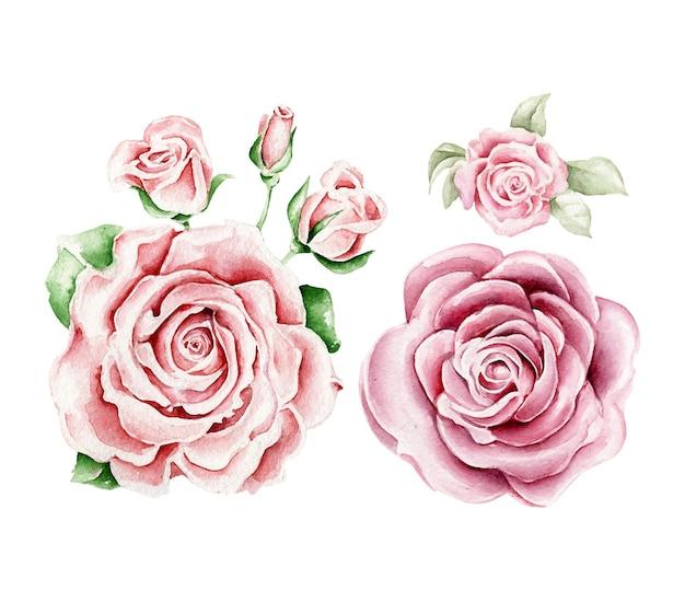 Акварельные розовые розы