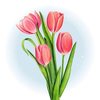 水彩ピンクのチューリップの花束