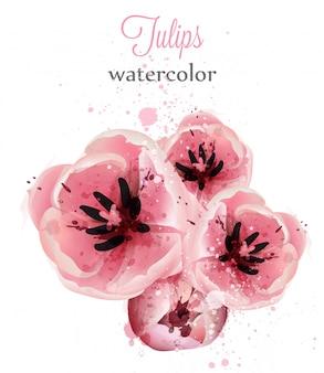 Watercolor pink tulips