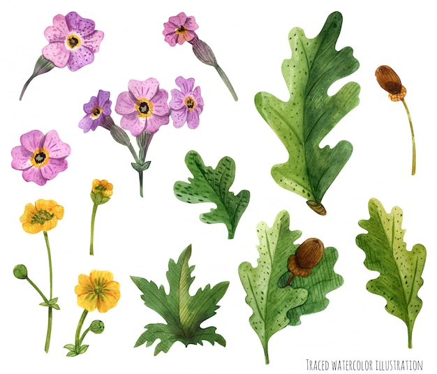 Watercolor plants of scotland