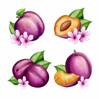 Акварель сливы фруктов и цветов иллюстрации
