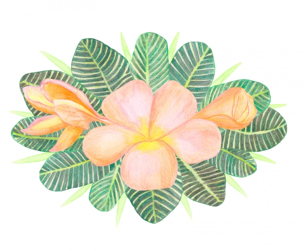 Watercolor plumeria flowers and green tropical leaves bouquet