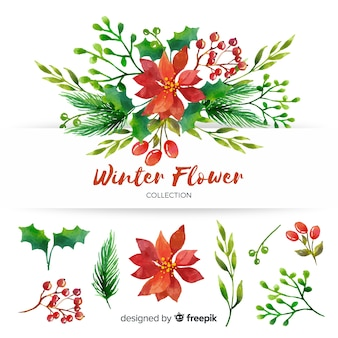 Watercolor poinsettia collection
