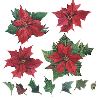 Watercolor poinsettia with christmas floral decor.