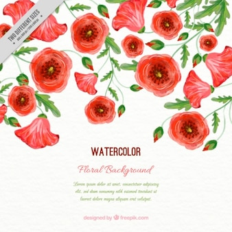 Watercolor poppies background with leaves