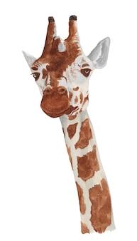 Акварельный портрет жирафа