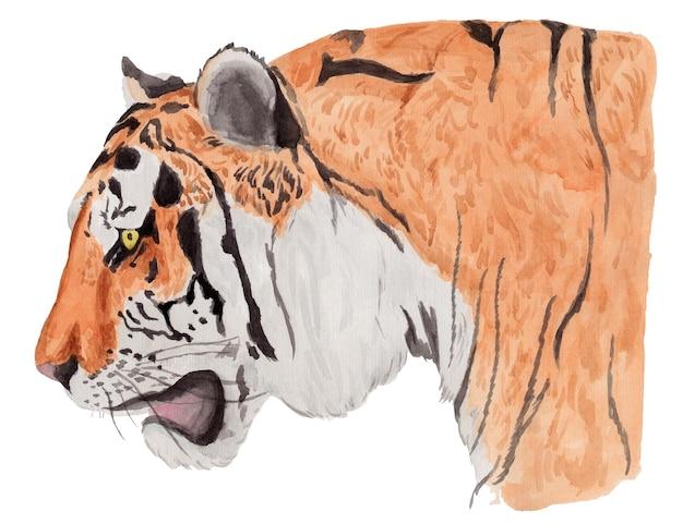 Акварельный портрет тигра в профиль, изолированные на белом фоне