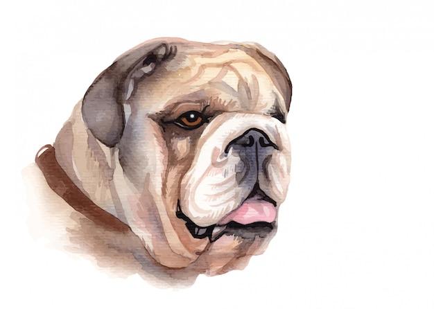パグ犬の水彩画の肖像画