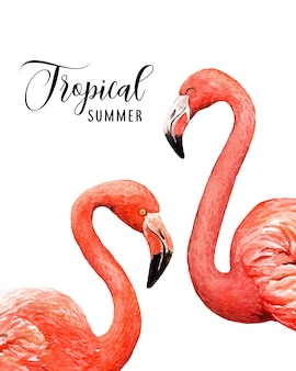Watercolor portrait tropical flamingo birds.