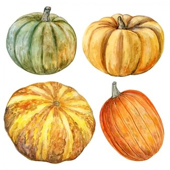 In watercolor pumpkins set