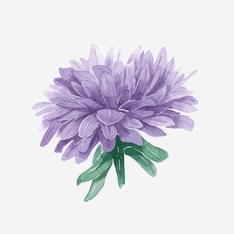 Watercolor purple aster vector hand drawn sticker element