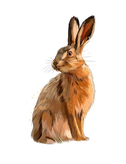 Акварель кролик на белом