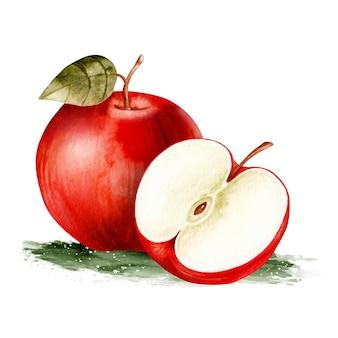 水彩のリアルな手描きの新鮮なリンゴの果実