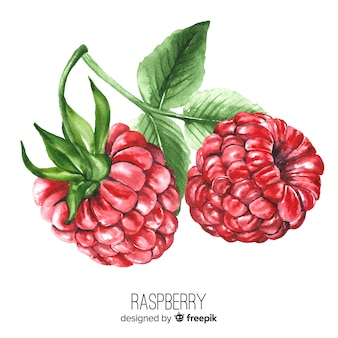 Watercolor realistic raspberry background