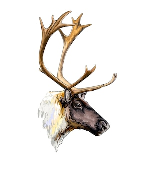 Watercolor reindeer head portrait on white