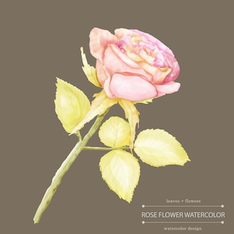 수채화 장미 꽃