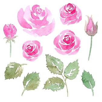수채화 장미 꽃과 잎
