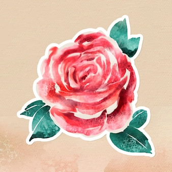 Watercolor rose overlay with a white border