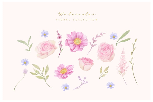 Watercolor roses and anemone flowers collection