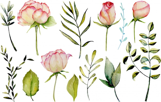 Watercolor roses, green leaves and branches set