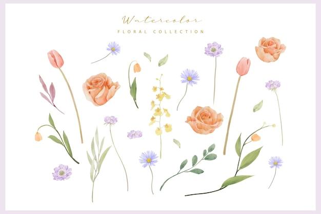 水彩のバラ、チューリップ、マツムシソウの花のコレクション