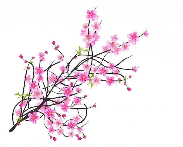 Watercolor sakura frame. background with blossom cherry tree branches.