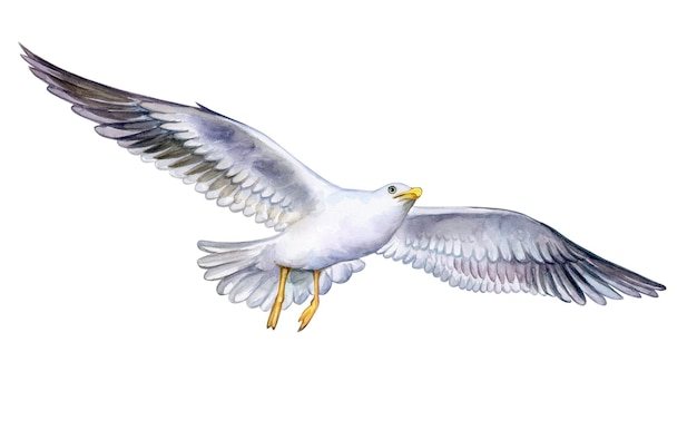 Watercolor seagull on the fly