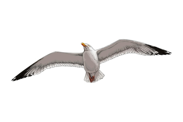 Watercolor seagull on white