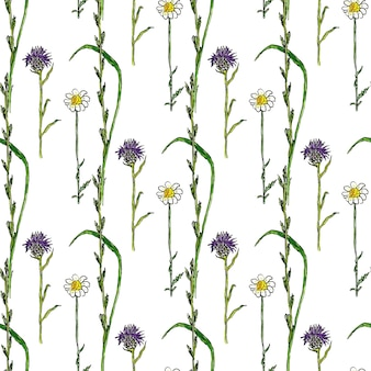 Watercolor seamless pattern with wild flowers. medecine herbal background