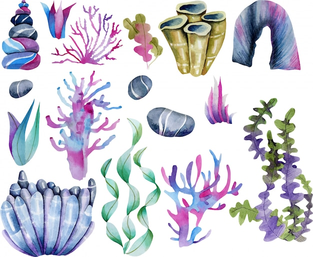 Watercolor seaweeds and sea stones colllection