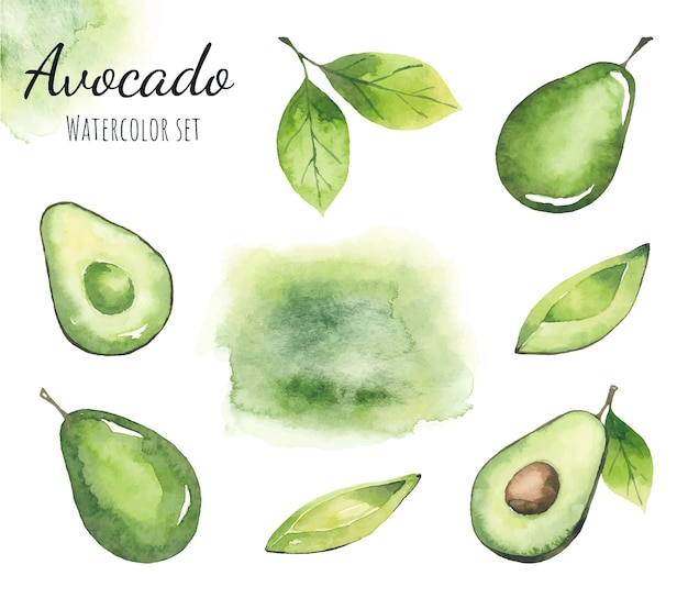 Watercolor set of avocado elements and watercolor green stain